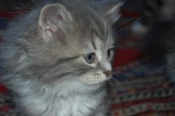 Anastasia, 7 uker
