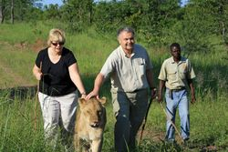 Walking With the Lions, Zimbabwe