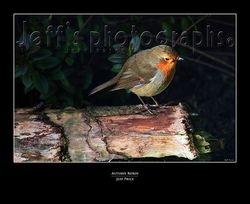 Autumn robin