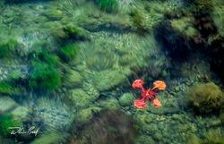 Flamboyant Float
