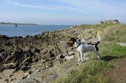 Ferienhaus Bretagne mit Hund 22