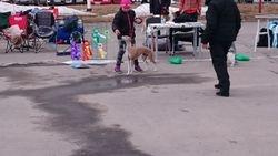 Barn med hund