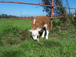 Learning to graze