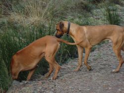 Elvis and Baako taking a drink in Devilla Forest