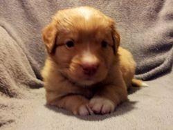 Boy 3 at 4 weeks