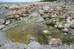 Seashore at Broom Point (from rock)