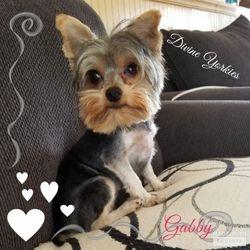 """""""Gabby"""""""