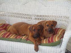 Charley and Sadey