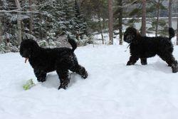 Orange and Blue enjoying lots of snow in Maine!  9 weeks.