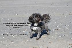Märzhund - Timmy