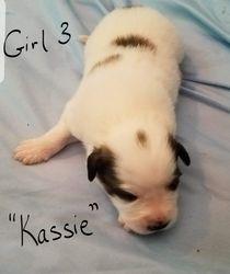 """Girl 3 - """"Kassie"""""""