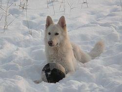 Cosmo ja pallo