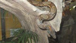 Eco Zoo