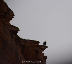 Bald Eagle Perched On A Red Rock Cliff