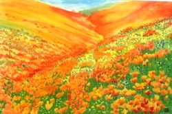 California Golden Poppies Field