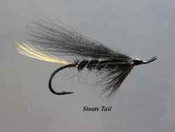 Stoats Tail