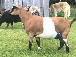 Back 40 Cowgirl