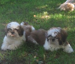 Brutis and Rocky