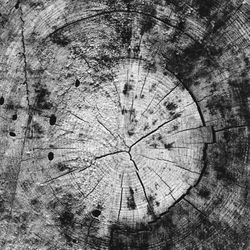 Brentwood B/W abstract photograph
