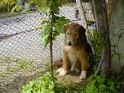 Barney under his favourite place the grape vine