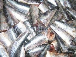 Sardine pilchardus HGT Morocco