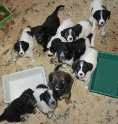 Pups at shelter in Bulgaria - 10 August 2013