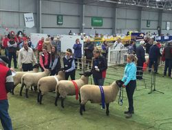 Wooly ewe class