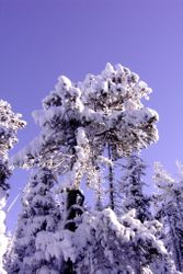 Akamina Snow