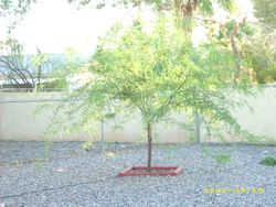 Donnie's tree