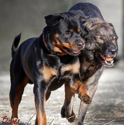 Jax & Ruger