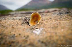 A shell on Skye
