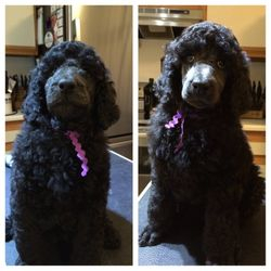 Purple before and after her haircut.  55 days.