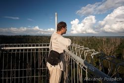 observation tower in rainforest