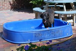 Doggy chill out pool