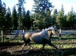 Salena in 2006
