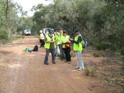 Malleefowl Mound Line Search 2011