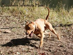 Southern Inferno's Hemi