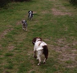 A run at the forest with Diesel and Toto