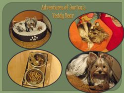Jorica's teddy bear adventures