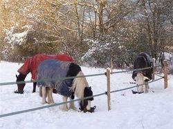 Emir, Tia and Atlanta in winter