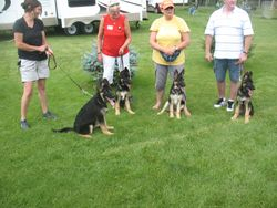 TAZZ AND MIKEYS LITTER 4 OF 6 PUPS