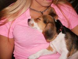 Sweet Dreams Sadie