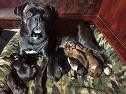 Olive with her babes