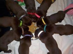 Rainbow of collars