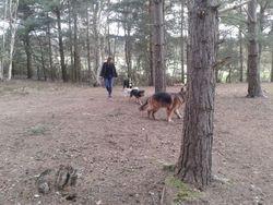 Sandhurst Dog Day Care