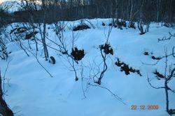 Vinterbildet fra Tennes