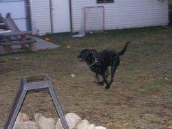Dakota on the run!