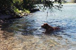 Amber Swim