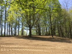 Hillside lawn, trees trimmed & ready for seed.