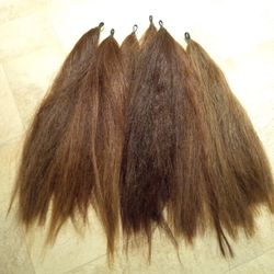 Chestnut tails